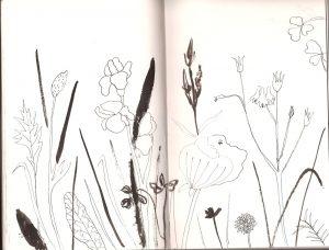 Тушь для рисования скетч зарисовка скетчбук цветы Петербург | Nadin Piter Надин Питер блог Нади Демкиной